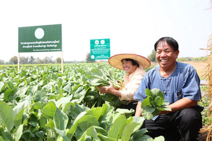 เทสโก้ โลตัส รับซื้อผักตรงจากเกษตรกรครบทั้ง 4 ภาค พร้อมยกระดับคุณภาพผักไทย