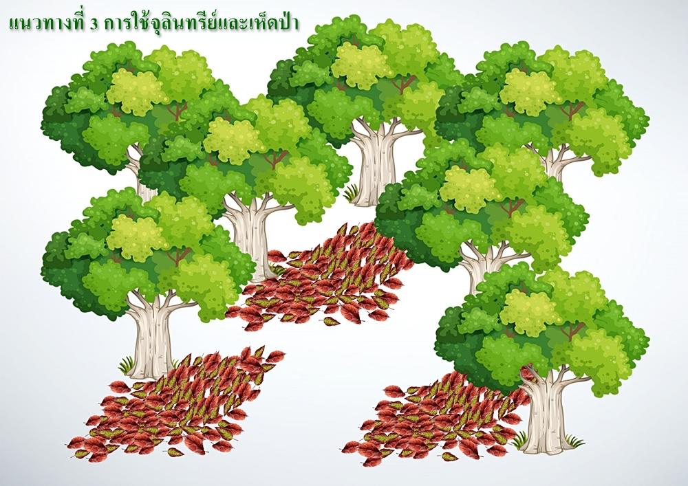นักวิจัย สวพส. แนะแนวทางการใช้เห็ดป่า แก้ปัญหาฝุ่น ควัน และไฟป่า