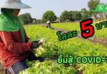 เกษตรกรปทุมธานียิ้มสู้ COVID-19 ผักกาดหอมราคาร่วงเหมือนนกตกจากฟ้า เหลือโลละ 5 บาท