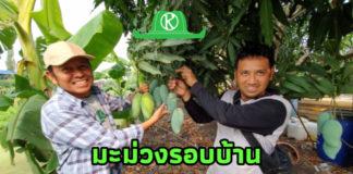มะม่วงรอบบ้าน ผัก ปลา อาหารมีครบ (คนไทยต้องผ่านวิกฤตโควิด 19 ไปให้ได้ )