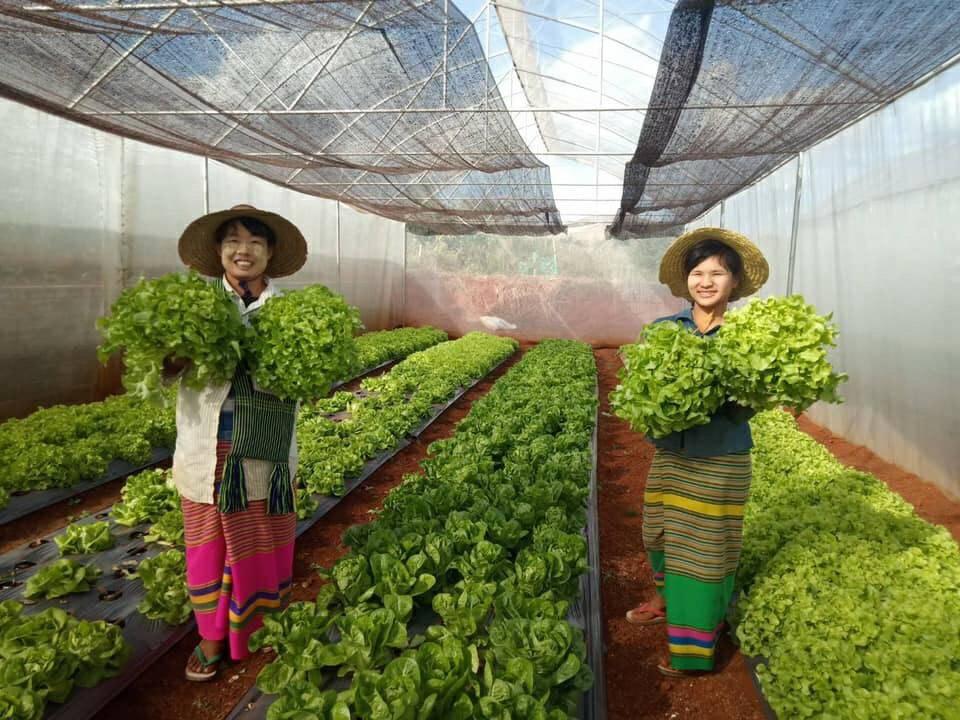 แม็คโคร เจาะแหล่งปลูกผักในรัฐฉาน สร้างโอกาสเกษตรกรท้องถิ่น ร่วมพัฒนามาตรฐานความปลอดภัยตลอดห่วงโซ่อาหาร ส่งผลผลิตป้อนสาขาเมียนมา