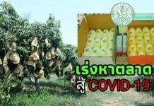 เกษตรฯ เร่งหาตลาดและแนวทางรองรับผลผลิตช่วยเหลือเกษตรกรที่ได้รับผลกระทบจาก COVID-19