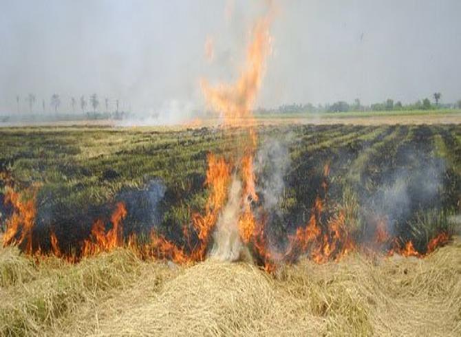 เกษตรฯ เดินหน้ารณรงค์ลดฝุ่น ลดควัน ชวนเกษตรกรงดเผาในพื้นที่การเกษตร