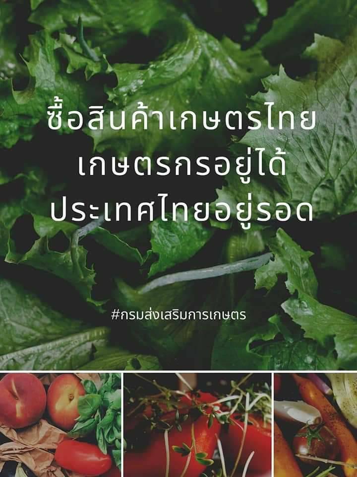 ซื้อสินค้าเกษตรไทย เกษตรกรอยู่ได้ ประเทศไทยอยู่รอด