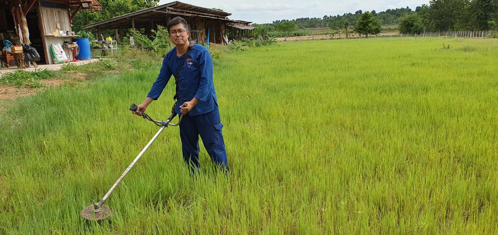 ต้องมีแปลงหญ้าประจำที่สามารถตัดให้ควายหรือปล่อยให้ควายกินได้