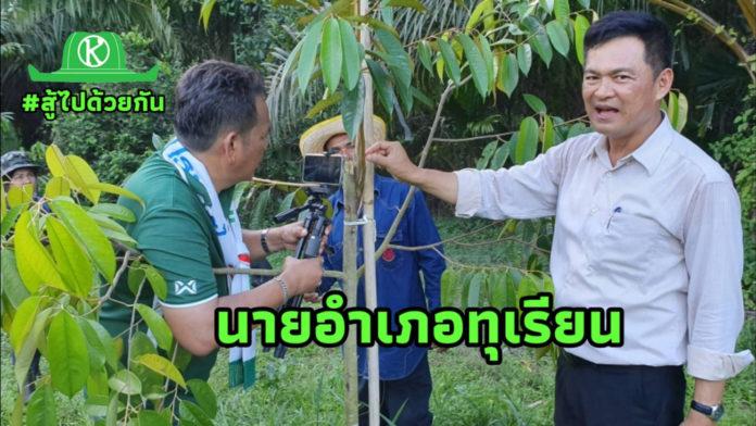 นายอำเภอเมืองชุมพรปลูกทุเรียน 200 ต้น ตายเหลือ 5 ต้น ต้องหามือดีมาช่วยจึงฟื้นชีพใหม่
