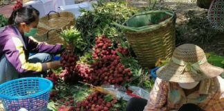 กรมส่งเสริมการเกษตรสั่งทุกจังหวัดสำรวจสินค้าเกษตรที่ได้รับผลกระทบ COVID-19 พร้อมหาแนวทางช่วยเหลือเกษตรกรจำหน่ายผ่านช่องทางต่าง ๆ