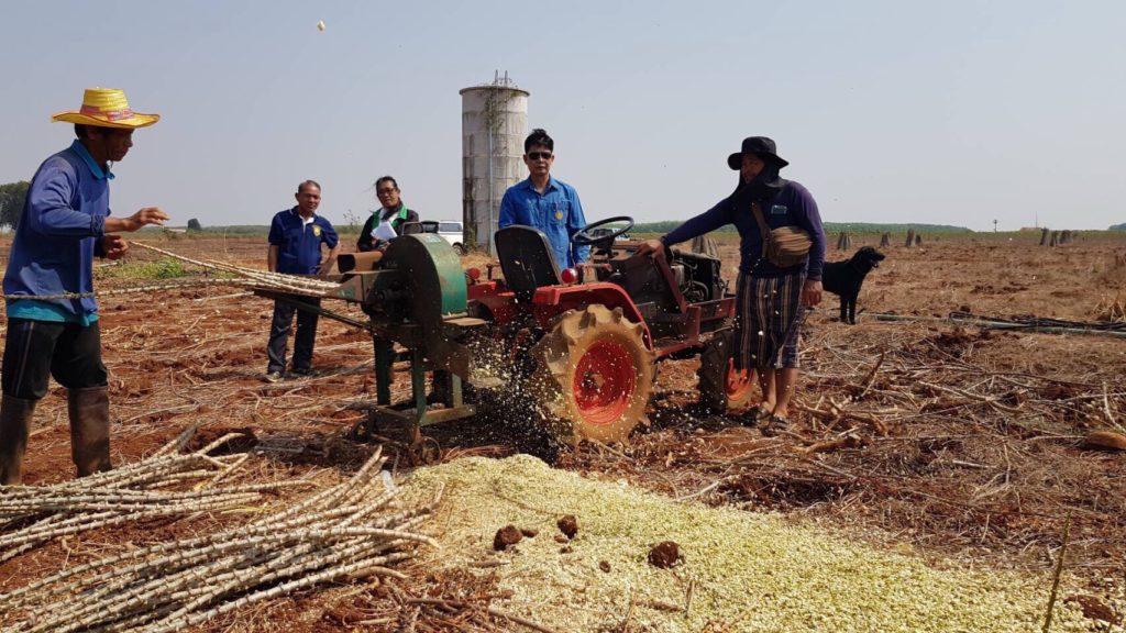 สศก. ลุย สระแก้ว-โคราช แหล่งระบาดโรคใบด่างมันฯ เร่งกำจัดโรคแล้วเกิน 50% เกษตรกรได้รับเงินชดเชยครบถ้วน