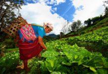 """สวพส. โชว์ผลงานวิจัย """"โลกร้อน...กับเกษตรบนดอย"""" ปรับตัวและแก้ไขอย่างไร กับสภาพอากาศที่แปรปรวน"""
