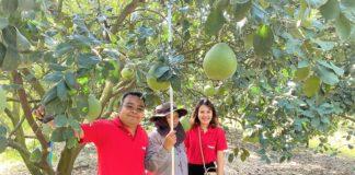 วิสาหกิจชุมชนเกาะทวดฯ จับมือ แม็คโคร ฝ่าโควิด-19 ส่งผักปลอดภัย ส้มโอดัง จากชาวสวนและโรงเรียนในพื้นที่ ขึ้นห้าง