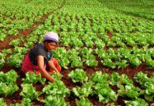 """สวพส. เดินหน้าช่วยเหลือเกษตรกรบนพื้นที่สูง บูรณาการความร่วมมือทุกภาคส่วน """"เร่งแก้วิกฤติภัยแล้งบนดอยสูง"""""""
