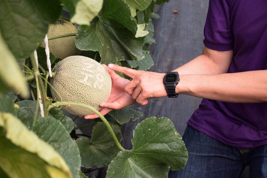 ชู 2 ปุ๋ยชีวภาพตัวท็อปช่วยสลายฟอสฟอรัสในดินส่งต่อพืช เพิ่มทั้งปริมาณและคุณภาพผลผลิต ต้านโรค ทนแล้ง