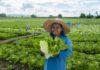 เจียไต๋ แนะปลูกพืชเก็บเกี่ยวไว 1-2 เดือน สร้างรายได้หมุนเวียน สู้วิกฤตโควิด-19