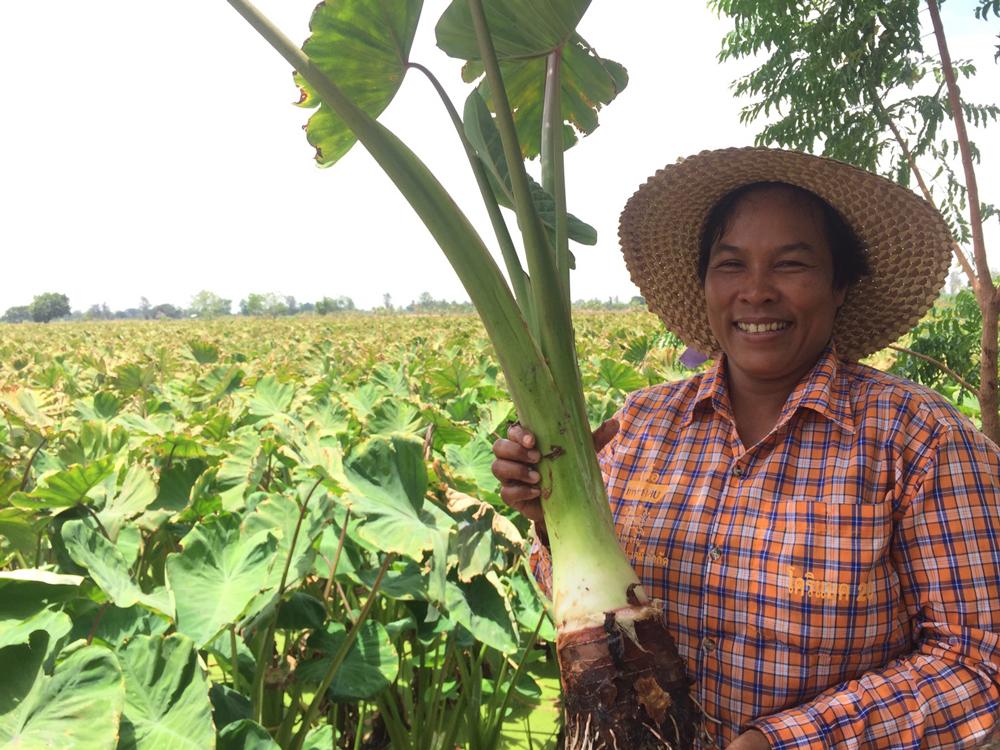 นางสุวิมล สุภธรรม เกษตรกรเจ้าของไร่เผือกหอม