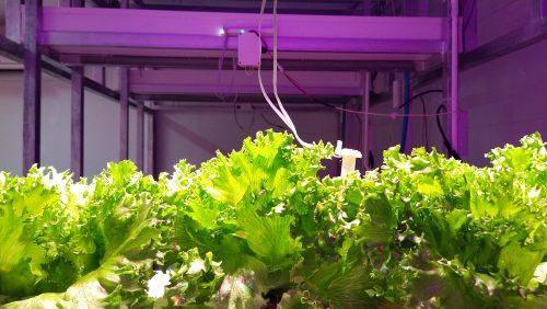 """วิศวะคอมพิวเตอร์ มข. เจ๋ง ออกแบบ """"ระบบควบคุมการทำงานอัตโนมัติ"""" ทางรอดของการปลูกพืชในโรงเรือน ใช้งานง่าย สะดวกควบคุมได้ทุกที่"""