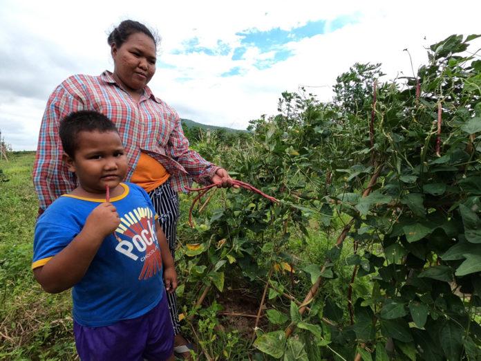 ซีพีเอฟ หนุนสร้างความมั่นคงทางอาหารระดับชุมชน ปลูกผักปลอดสาร -ตั้งธนาคารเมล็ดพันธุ์