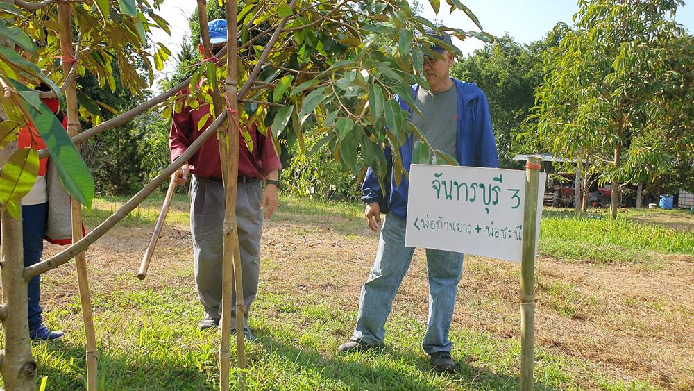 เรียนปลูกทุเรียน สวนเพชรนครไทย