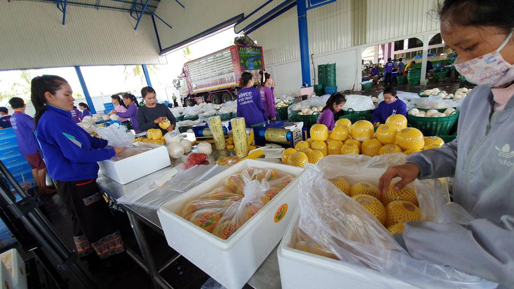ธ.ก.ส.หนุนช่วย SMEs เกษตร ลงพื้นที่มะพร้าวน้ำหอม จ.ราชบุรี