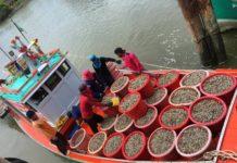 อธิบดีประมง เผย!! พบหอยลายจำนวนมากบริเวณอ่าวไทยตอนใน เป็นผลจากมาตรการของรัฐ และความร่วมมือของพี่น้องชาวประมง