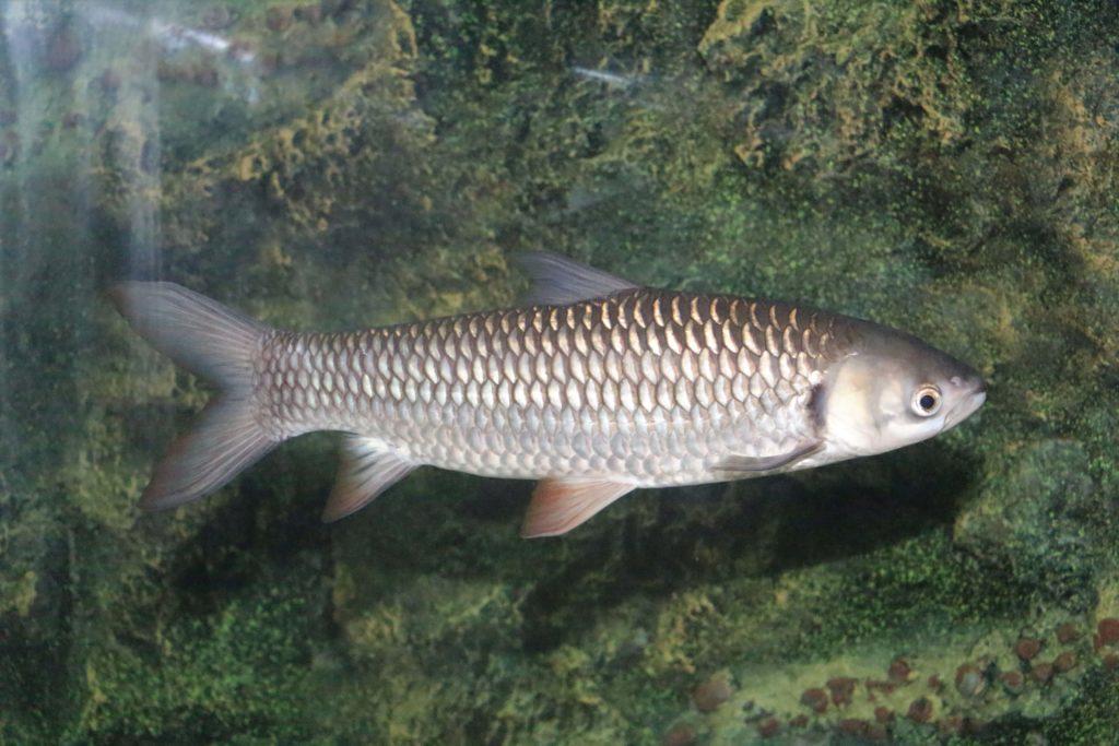 กรมประมง จัดพิธีปล่อยพันธุ์ปลาไทย 38 ล้าน 5 แสนตัว ทั่วประเทศ เนื่องในโอกาสวันเฉลิมพระชนมพรรษา พระบาทสมเด็จพระวชิรเกล้าเจ้าอยู่หัว รัชกาลที่ 10