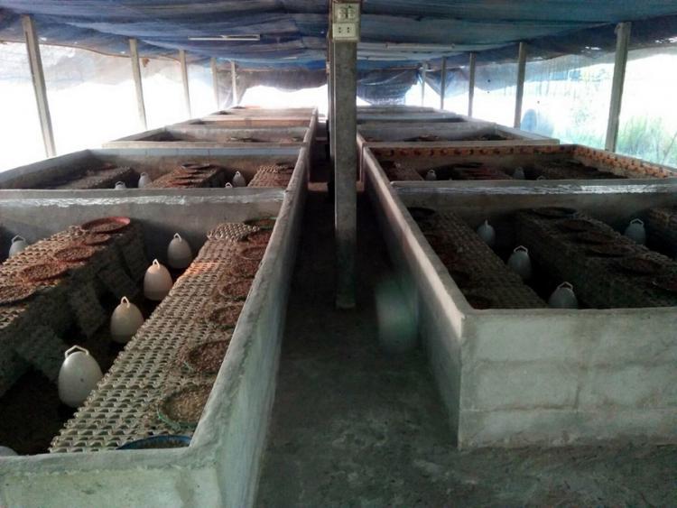 รัฐมนตรีเกษตรฯ ดันไทยสู่มหาอำนาจจิ้งหรีดโลก สศก. โชว์ศักยภาพ เกษตรผลิตพาณิชย์ตลาด ขับเคลื่อนอุตสาหกรรมเกษตร ด้วยศาสตร์พระราชาเพื่อการพัฒนาที่ยั่งยืน