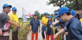 บมจ.ไทยเซ็นทรัลเคมี ร่วมกับ มหาวิทยาลัยเกษตรศาสตร์ วิทยาเขตเฉลิมพระเกียรติ จัดทำแปลงข้าวสาธิตเพิ่มผลผลิตข้าวไทยและลดต้นทุนให้เกษตรกร