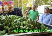 """กล้วยหินแดนใต้ไปได้ดีที่เพชรบูรณ์..แปลงร่างเป็น """"กล้วยหินใส้มะขามหวาน-บัวโฮม"""""""