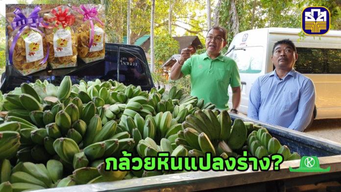 """กล้วยหินแดนใต้ไปได้ดีที่เพชรบูรณ์..แปลงร่างเป็น """"กล้วยหินใส้มะขามหวาน-บัวโฮม"""