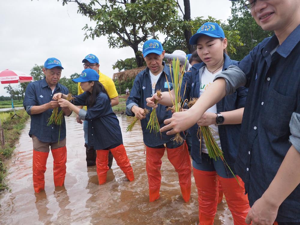 บมจ.ไทยเซ็นทรัลเคมี จัดทำแปลงข้าวสาธิตเพิ่มผลผลิตข้าวไทยแ