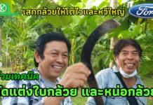 วิธีตัดแต่งใบกล้วยและหน่อกล้วยให้ได้หวีใหญ่สไตล์สมชาย แซ่ตัน จ.กาญจนบุรี