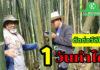 เรียนตัดต่อวิดีโอบนมือถือกับทีมงานเกษตรก้าวไกล 1 วันทำได้