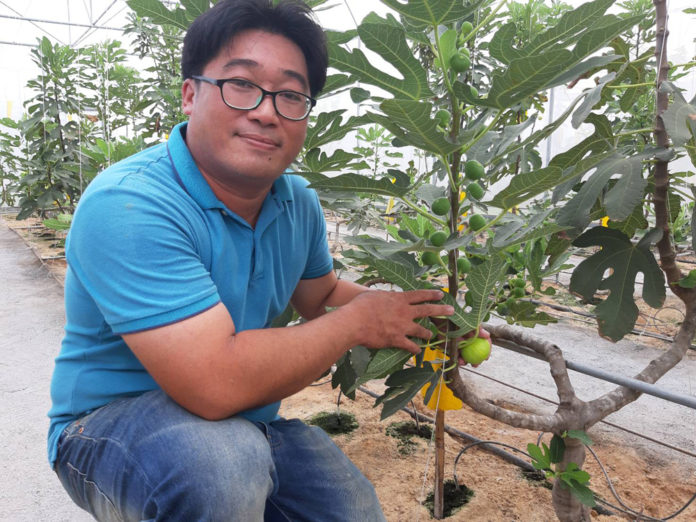 """""""เดอะ ฟิกเนเจอร์"""" ปลูกมะเดื่อฝรั่งในโรงเรือน ธ.ก.ส.หนุนสุดๆทำสวนเพื่อท่องเที่ยวที่ชลบุรี"""