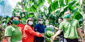 เกษตรกรโคราชเฮ! ปลูกกล้วยหอมทองขายคิงฟรุทส์-แม็คโคร ตั้งเป้า 5 ปี 60 ล้านบาท
