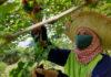 สศช. กับบทบาทขับเคลื่อนแผนฯ 12 ในประเด็นการพัฒนาเกษตรอัจฉริยะ