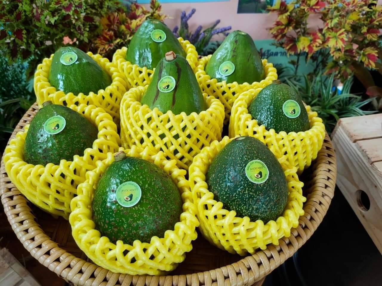 ชวนเที่ยวงาน...เทศกาลอะโวคาโด้ พบพระ ชม ชิม ช๊อป อะโวคาโด้สดๆจากสวน และผลิตภัณฑ์แปรรูป