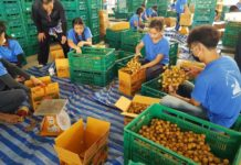 เกษตรฯ สั่ง Fruit Board ประชุมเยียวยาชาวสวนลำไย ปี'63 เสนอ ครม.วงเงินกว่า 3 พันล้านบาท