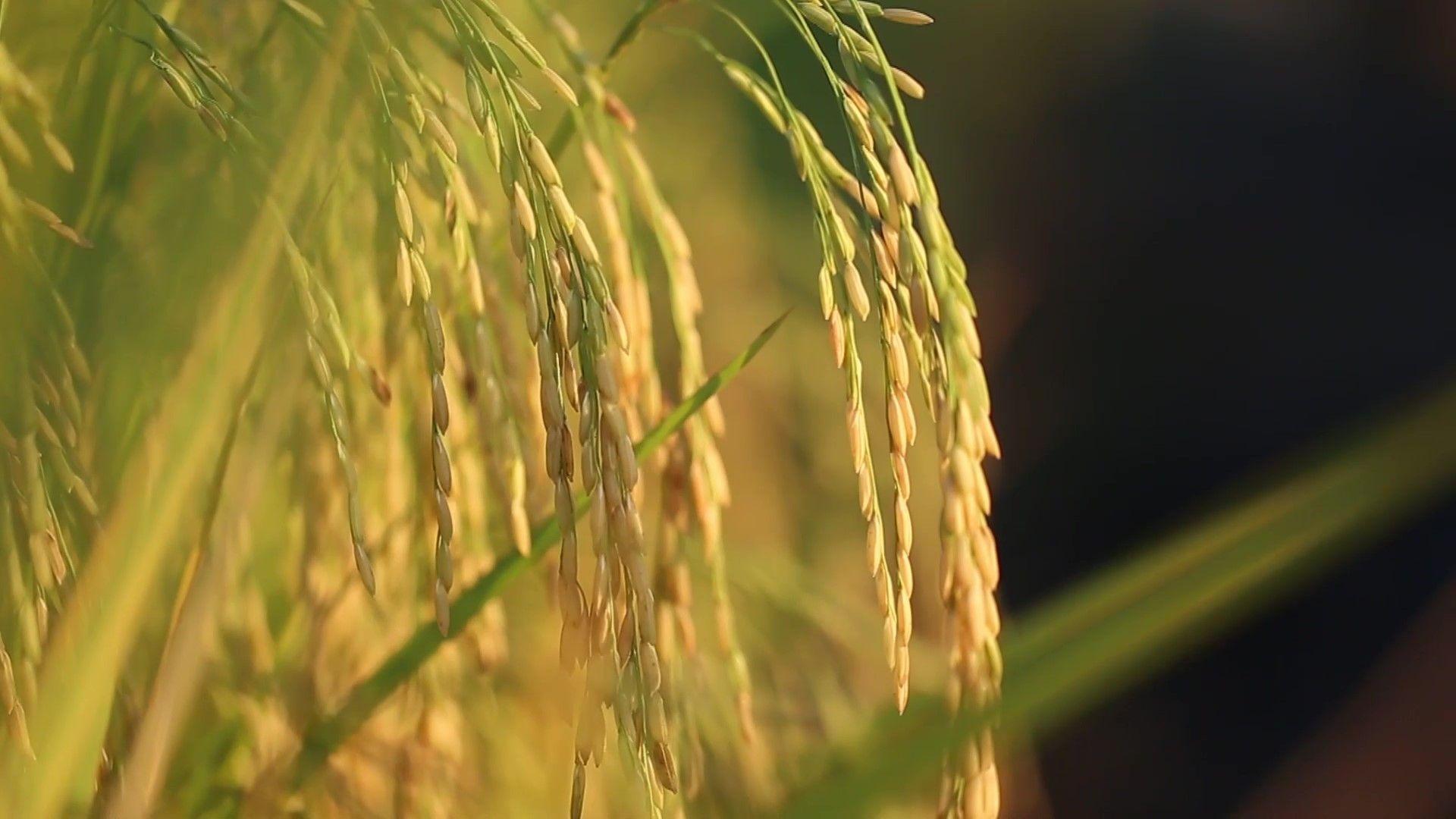 ปุ๋ยเคมี ไม่ใช่สารพิษ ใช้ถูกสูตร ถูกอัตรา ถูกเวลา ถูกวิธี มีความรู้ เพิ่มทางรอดให้เกษตรกรไทย
