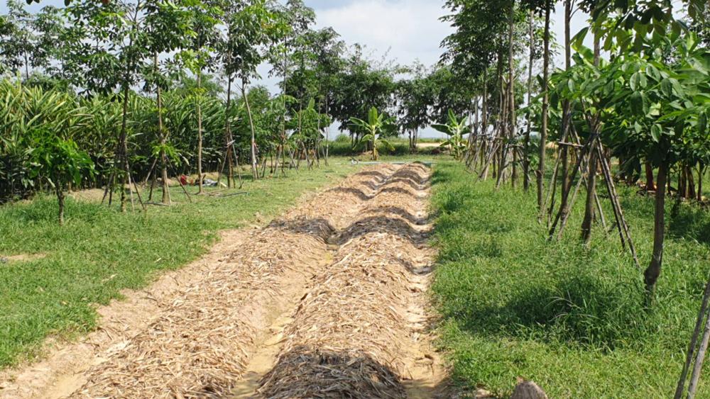 สาธิตการปลูกพืชแซมในสวนยางพารา
