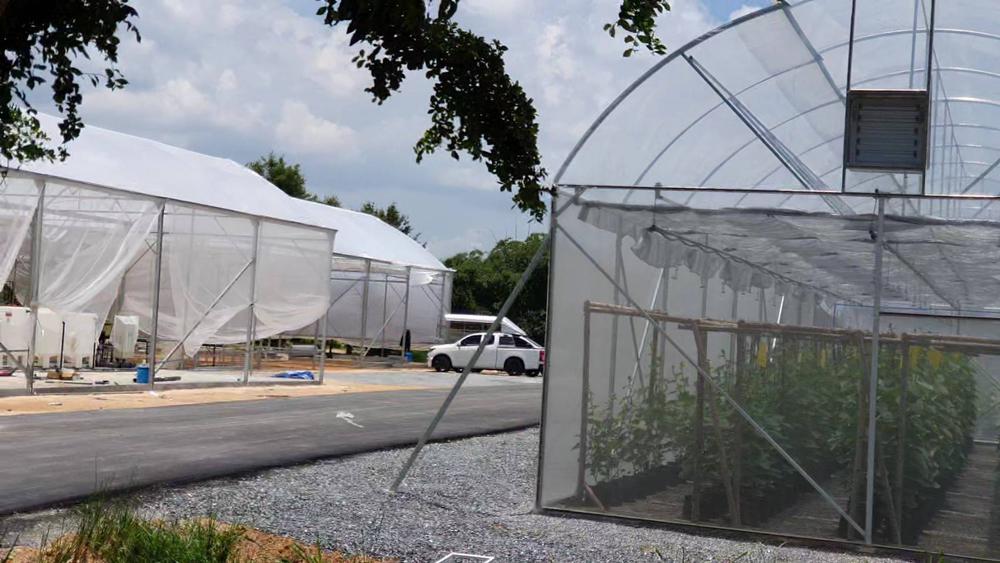 โซนนี้แสดงการปลูกพืชในระบบโรงเรือน