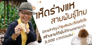 เห็ดร่างแหสายพันธุ์ไทยคุณสมบัติตอบโจทย์คนรักสุขภาพและผู้สูงวัย สร้างรายได้เพิ่มให้เกษตรกร