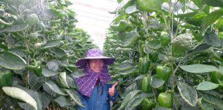 สวพส. แนะเกษตรกร ใช้ระบบเกษตรแบบประณีตปลอดภัย ทำน้อยได้มาก
