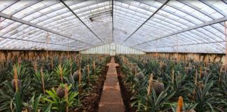 นครพนมเดินหน้า เพิ่มประสิทธิภาพการผลิตสินค้าเกษตรปลอดภัย