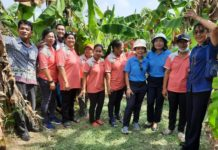 'กรมเจรจาฯ' ลงพื้นที่สุโขทัย แนะเกษตรกรใช้ประโยชน์จาก FTA เพิ่มส่งออกกล้วยสด-แปรรูป สร้างรายได้ช่วงโควิด-19