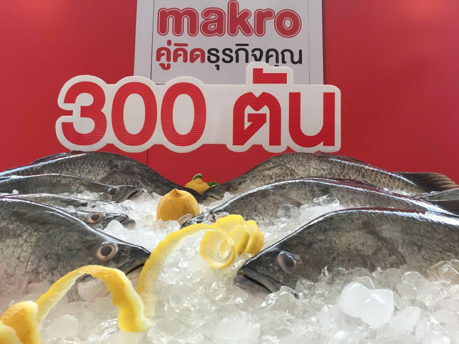 แม็คโคร ปลื้ม! ดันยอดรับซื้อปลากะพง ช่วยเกษตรกรระบายผลผลิตได้กว่า 300 ตัน หนุนสุดแรง เพิ่มวาไรตี้แล่หั่นชิ้น ชูเป็นไอเท็มเด็ด พร้อมจัดโปรโมชั่น-โรดโชว์ กระตุ้นการบริโภค