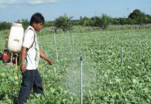 เกษตรกรแห่ใช้ชีวภัณฑ์ไส้เดือนฝอยกำจัดแมลงสายพันธุ์ไทย กรมวิชาการเกษตรรุดสร้างเกษตรกรต้นแบบผลิตเองได้ใช้เป็น