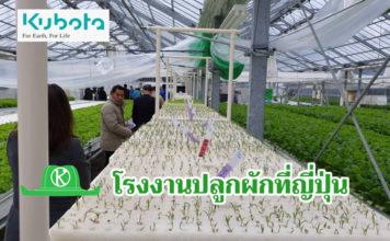 """ชมโรงงานปลูกผัก """"คูโบต้าฟาร์ม-ญี่ปุ่น"""" สร้างอาชีพผู้พิการและคนในชุมชน"""