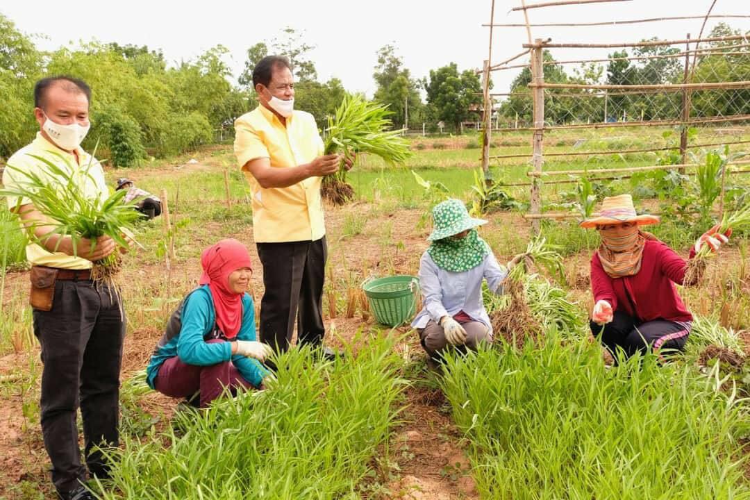 กรมส่งเสริมการเกษตรยกระดับโครงการฟาร์มตัวอย่าง 17 จังหวัดต้านภัยโควิด 19