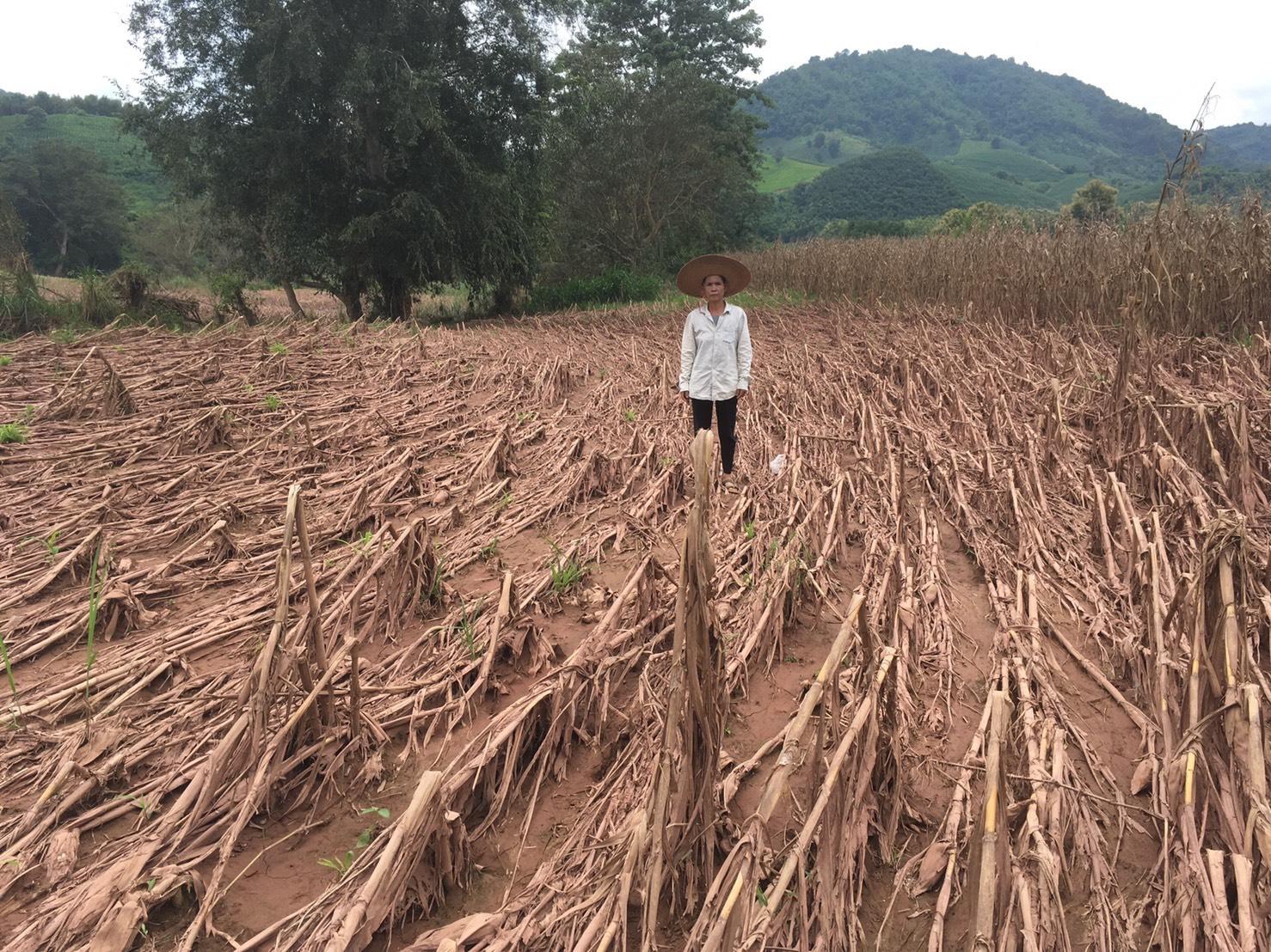 """""""เฉลิมชัย"""" ห่วงใยปัญหาน้ำท่วมสั่งกรมส่งเสริมการเกษตรเร่งสำรวจพื้นที่เสียหายทั่วประเทศ"""