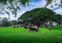 13ปี การเปิดบริการท่องเที่ยวเชิงเกษตร อ.ส.ค. เตรียมปรับโฉมเส้นทางท่องเที่ยวฟาร์มโคนมไทย-เดนมาร์ค