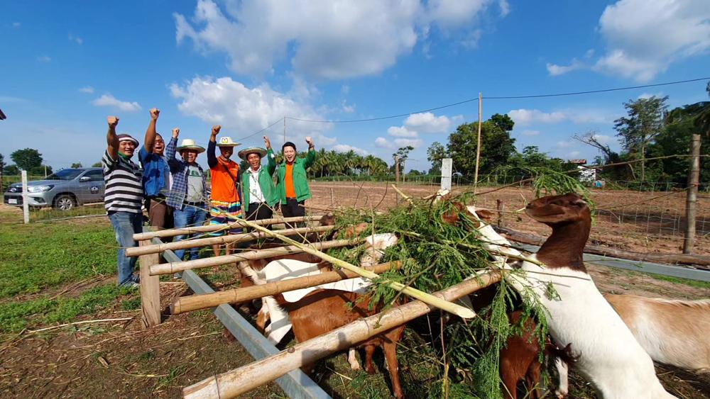 ชูมือได้สุดๆ ที่ ฟาร์มเลี้ยงแพะเนื้องของเกษตรกรรุ่นใหม่ อ.โชคชัย โคราช